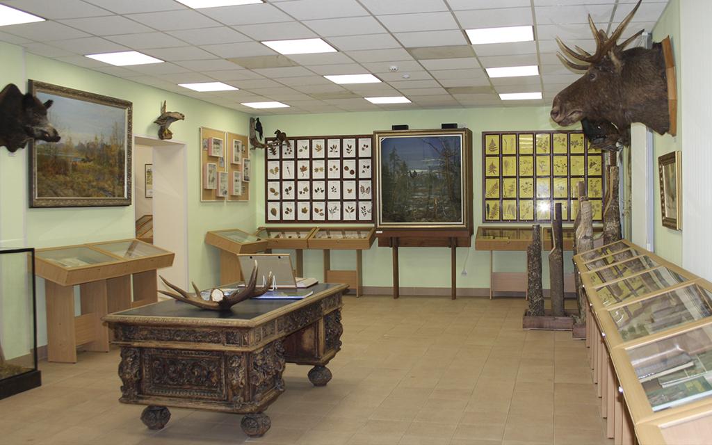 Экспонаты музея природы и истории лесоводства в Лисино-Корпус