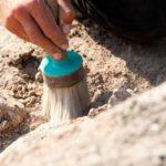 В Копорскую крепость возвращается волонтерский археологический лагерь
